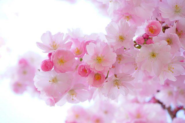 miss dior parfume miss dior blooming bouquet