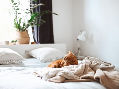 Kat på seng i soveværelset